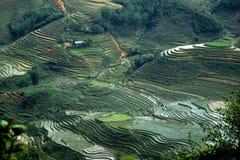 Campos del arroz en Vietnam 1 Foto de archivo libre de regalías