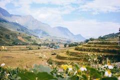 Campos del arroz en Vietnam Imagen de archivo libre de regalías