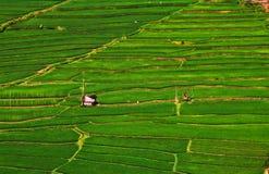 Campos del arroz estructurados en terracces foto de archivo