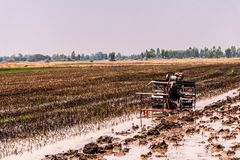Campos del arroz que se han cosechado y se est?n preparando para el establecimiento siguiente del arroz imagen de archivo