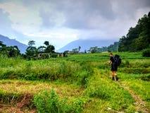 Campos del arroz y de maíz, Nepal Imagen de archivo libre de regalías