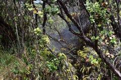 Campos del azufre en la isla grande en Hawaii foto de archivo