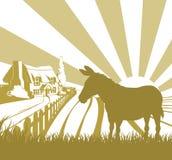 Campos del balanceo del burro de la granja Fotografía de archivo