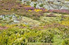 Campos del brezo Imagenes de archivo