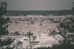 campos del césped en beeing del área del pantano cultivado para la cosecha - mirada retra de la película del vintage fotografía de archivo libre de regalías
