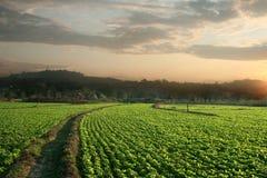 Campos del cacahuete Foto de archivo libre de regalías