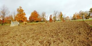 Campos del cerdo fotografía de archivo