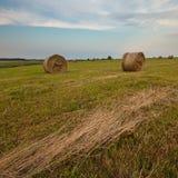 Campos del cereal Imagen de archivo
