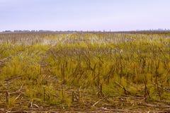 Campos del girasol de la visión después de la cosecha Foto de archivo