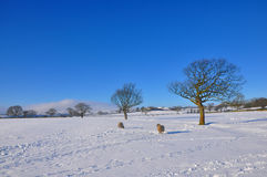 Campos del invierno Imagen de archivo libre de regalías