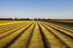 Campos del lino en Normandía, Francia Imagen de archivo
