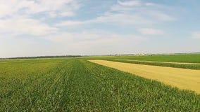 Campos del maíz y de trigo aéreos almacen de video