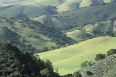 Campos del resorte en el valle de Carmel Foto de archivo libre de regalías
