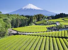 Campos del té verde imagen de archivo libre de regalías