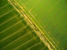 Campos del trigo y de la rabina con las pistas del tractor imagen de archivo libre de regalías