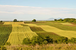 Campos del trigo y del girasol fotografía de archivo