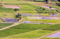 Campos del valle y del taro de Hanalei imágenes de archivo libres de regalías