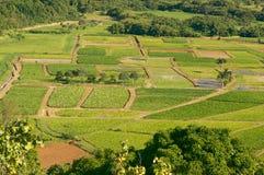 Campos del valle y del taro de Hanalei fotos de archivo