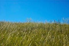 Campos del verano Foto de archivo libre de regalías