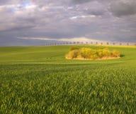 Campos del verano, campos de maduración de la cosecha de grano Fotos de archivo libres de regalías