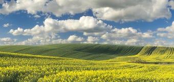 Campos del verano, campos de maduración de la cosecha de grano Imagen de archivo libre de regalías