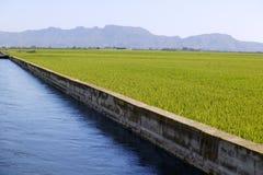 Campos del verde del cereal del arroz y canal azul de la irrigación Foto de archivo