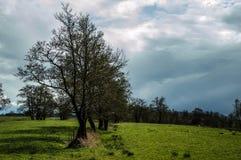 Campos del Wieden Foto de archivo libre de regalías