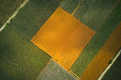 Campos do abacaxi foto de stock