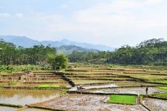 Campos do arado dos fazendeiros para plantar o arroz fotografia de stock