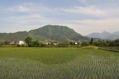 Campos do arroz foto de stock royalty free