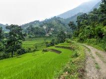Campos do arroz ao lado da borda da estrada Foto de Stock