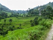 Campos do arroz ao lado da borda da estrada Foto de Stock Royalty Free