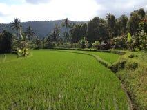 Campos do arroz, Bali imagem de stock