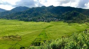 Campos do arroz de Cancar Spiderweb imagem de stock