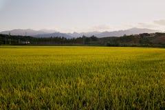 Campos do arroz de Coreia Fotos de Stock Royalty Free