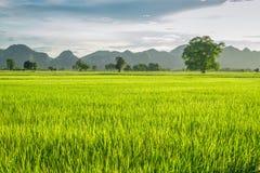 Campos do arroz de Kanchanaburi, Tailândia Imagens de Stock Royalty Free