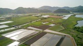 Campos do arroz de Shiga, Japão Fotografia de Stock