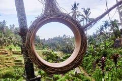 Campos do arroz de Tegalalang em Ubud, Bali, Indon?sia fotos de stock royalty free