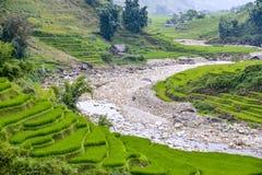 Campos do arroz do Pa do Sa em Vietname imagens de stock