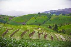 Campos do arroz do terraço Fotos de Stock Royalty Free