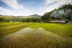 Campos do arroz do terraço Imagem de Stock Royalty Free