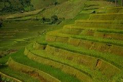Campos do arroz do terraço Foto de Stock Royalty Free