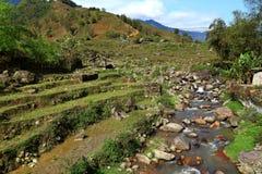 Campos do arroz do terraço Fotografia de Stock Royalty Free