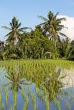 Campos do arroz do terraço, Bali, Indonésia Imagem de Stock Royalty Free