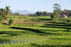 Campos do arroz do terraço, Bali, Indonésia Imagens de Stock