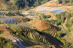 Campos do arroz do terraço em Sapa, Vietname Fotografia de Stock Royalty Free