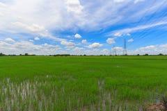 Campos do arroz e céu azul com Imagens de Stock Royalty Free