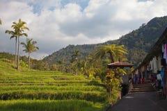 Campos do arroz e palmeiras de Bali Imagem de Stock Royalty Free