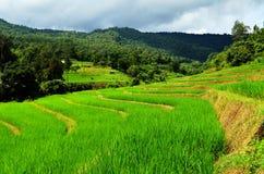 Campos do arroz em Chiang Mai (Tailândia do norte) Imagens de Stock Royalty Free