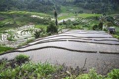 Campos do arroz em sumatra Fotografia de Stock